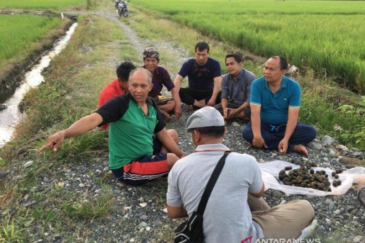 Bupati kunjungi transmigran Bangli di Sulawesi Tengah