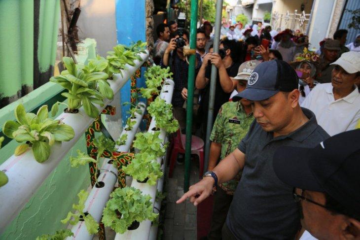 Kampung Hidroponik Simorejo Surabaya berkembang di lahan terbatas
