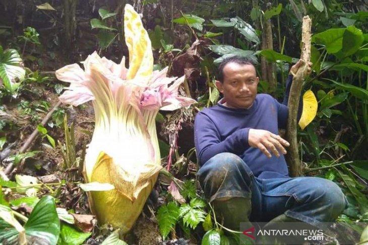 Petani Abdya temukan Bunga Bangkai