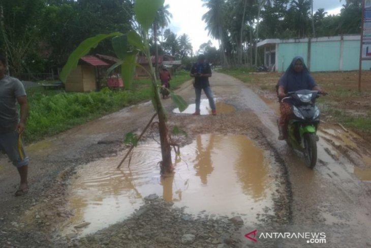 Tidak diperbaiki, warga Aceh Jaya tanam pisang di jalan lintas kecamatan