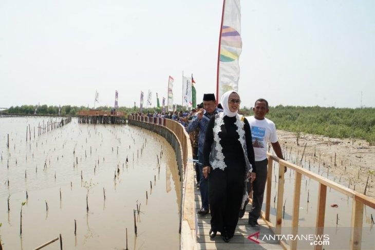 Pertamina ''sulap'' bibir pantai tergerus abrasi jadi wisata edukasi mangrove