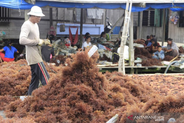 Ministry eyes for 10.99 million tons seaweed yield in 2020