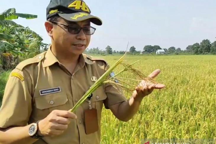 Kemandirian pangan, Kalbar tahun 2019 target 1,7 juta ton GKG
