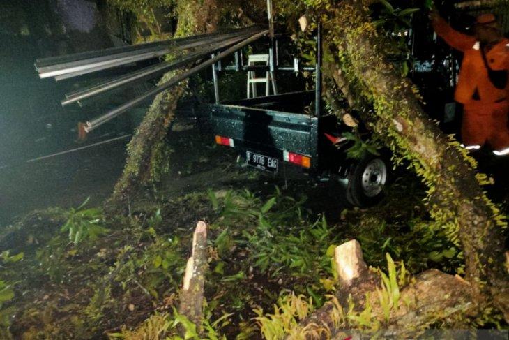 Akibat hujan, pohon tumbang timpa sejumlah mobil