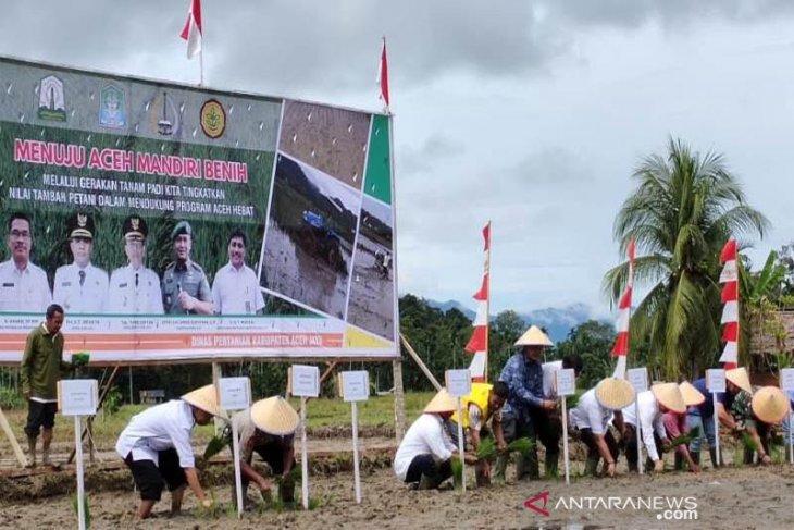 Aceh Jaya diharapkan jadi penyuplai benih padi di barat - selatan
