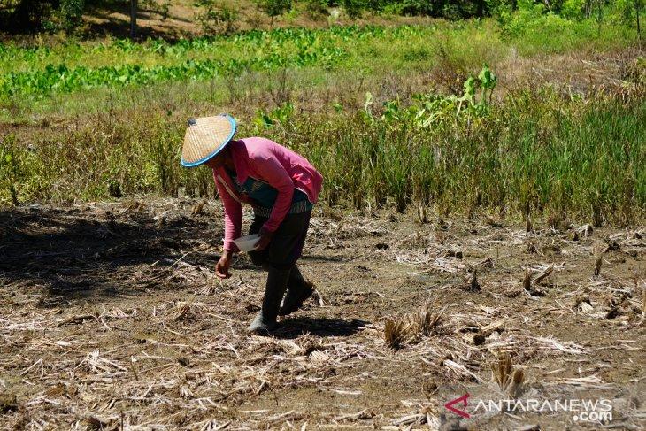 Lima kawasan transmigrasi Gorontalo jadi prioritas nasional