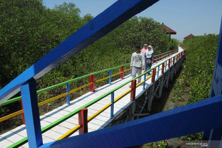 Berlibur ke Ekowisata Mangrove