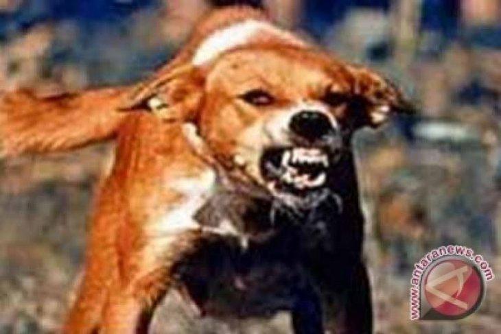 Tujuh warga Tapanuli Selatan digigit anjing gila