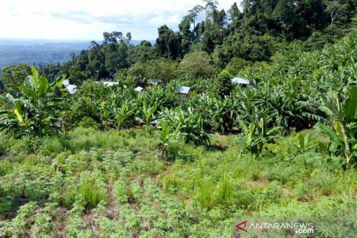 Hutan lindung di Abdya jadi permukiman warga