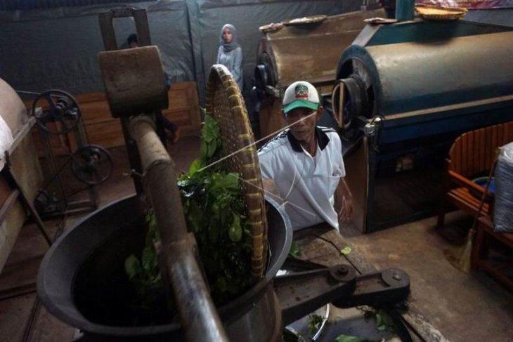 Produksi teh organik