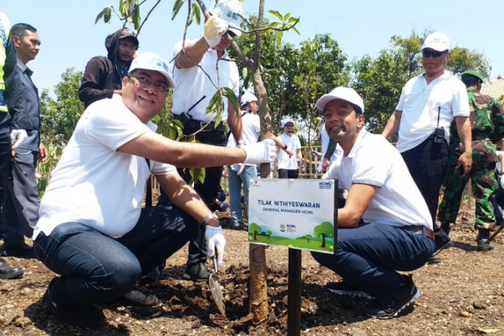 Di Pesisir Pasuruan, HCML tanam 15 ribu mangrove
