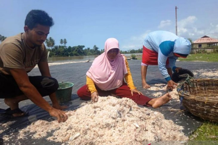 Permintaan udang sabu di Aceh terus meningkat