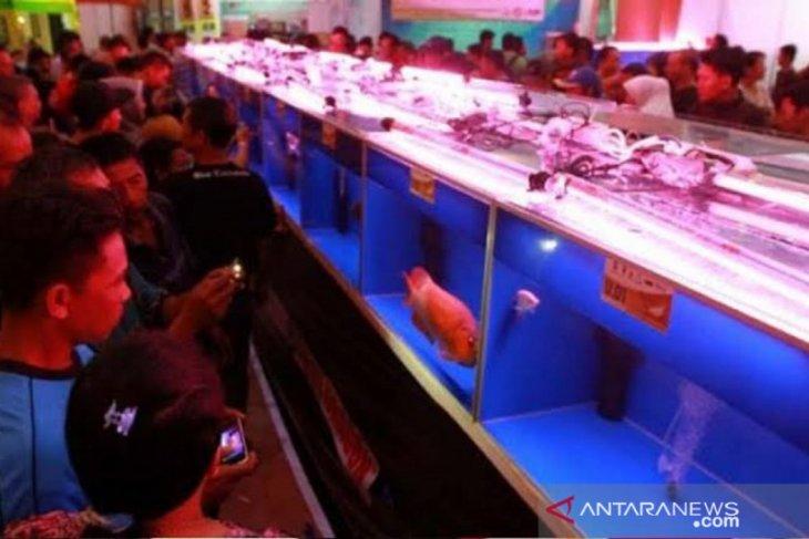 1.000 pengunjung datangi kontes Arwana Kalbar