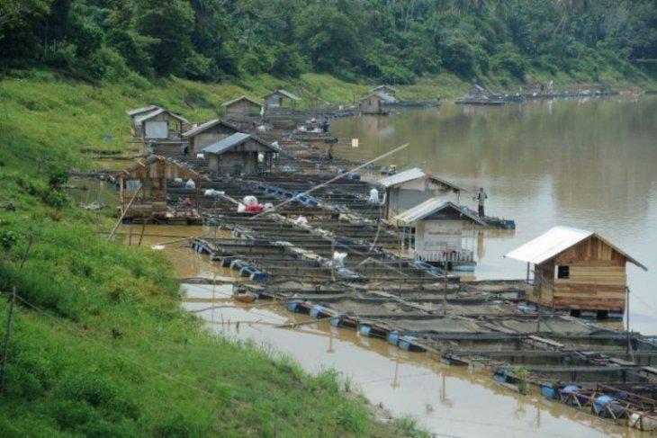 Budidaya ikan keramba terapung di Sungai Batanghari