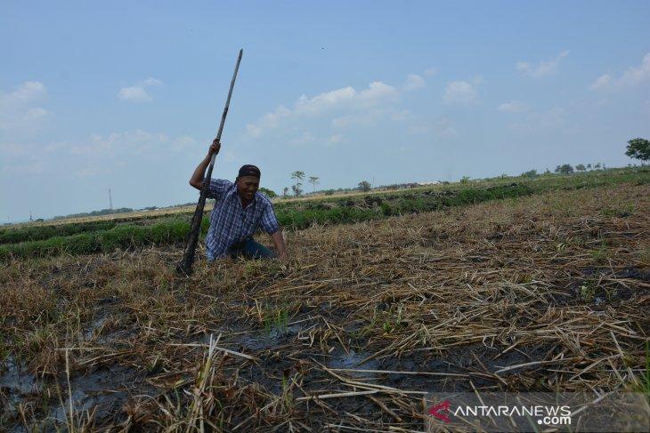Fenomena tanah lembek di Jombang