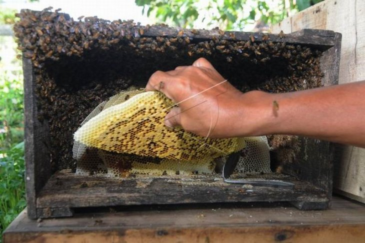 Edukasi budidaya lebah madu Jawa