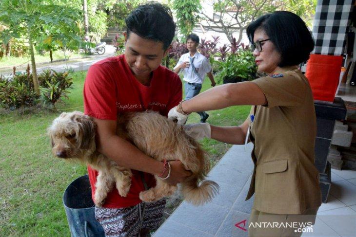 2019, Distan Denpasar lakukan vaksinasi rabies pada 73.587 satwa