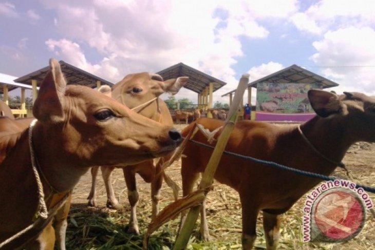 NTB akan stop pengiriman sapi ke daerah lain