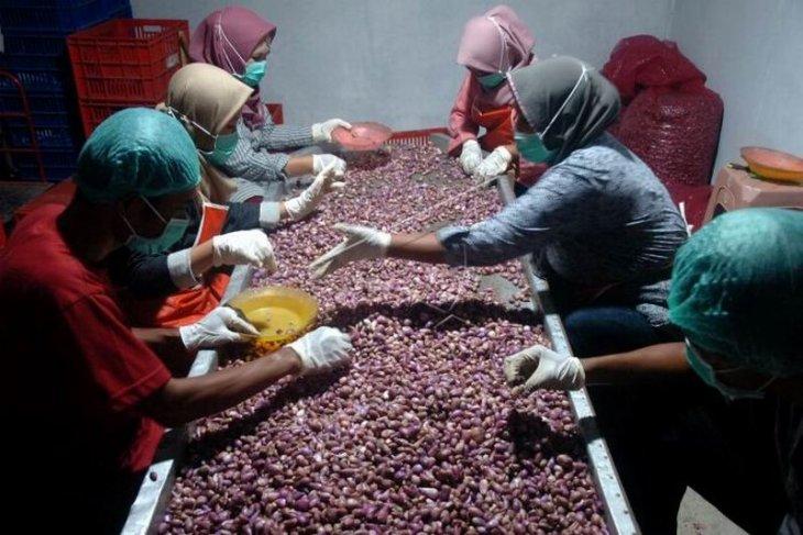 Ekspor perdana bawang merah ke Arab Saudi
