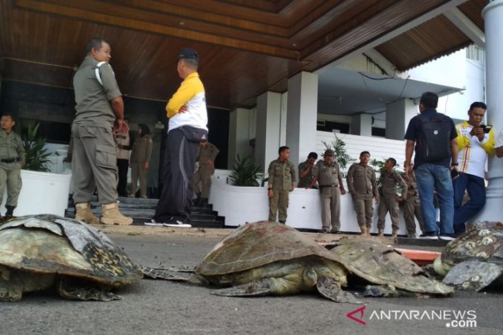 Bengkulu residents give four turtle carrions to governor