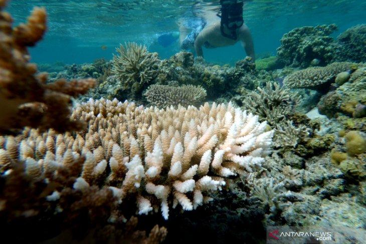 Pulo Cinta Ecoresort Boalemo tawarkan keindahan bawah laut