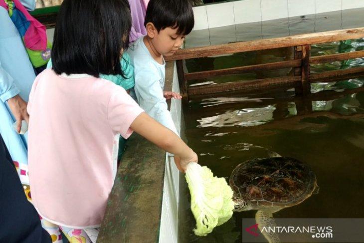 Penangkaran penyu Pantai Pangumbahan Sukabumi jadi  wisata edukasi