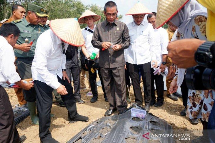 Gubsu saksikan penanaman perdana 4 hektare cabai dan bawang merah di Batubara