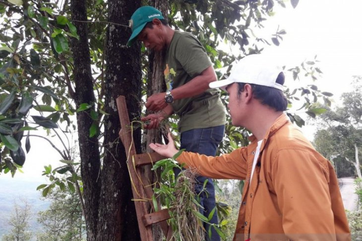 FKH returns Kalimantan orchid to forest