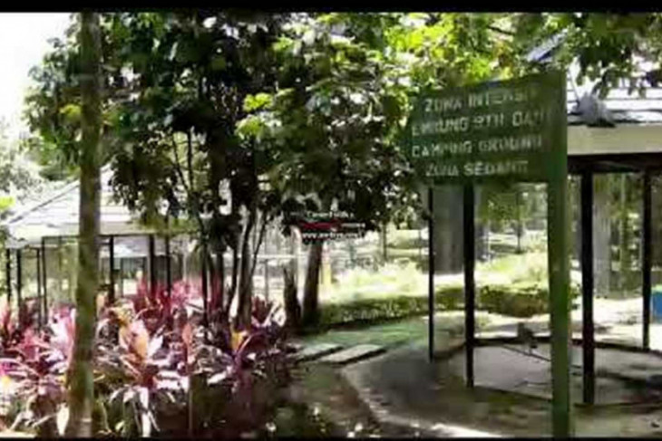 Kota Jambi segera benahi tiga kawasan hutan kota