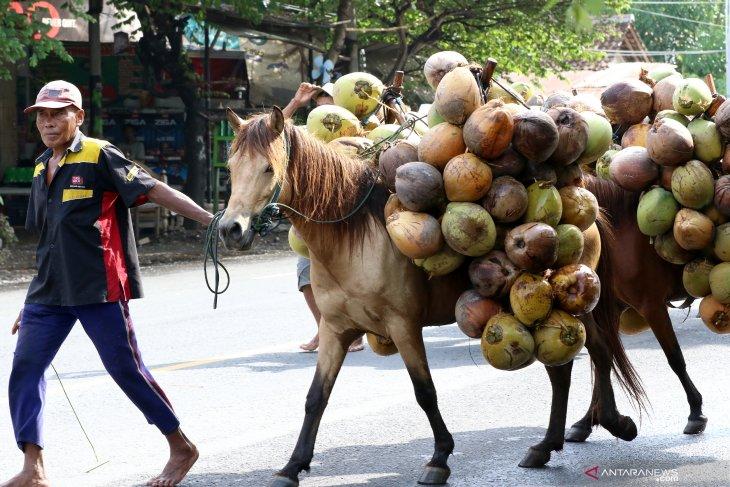 Kuda pengangkut kelapa