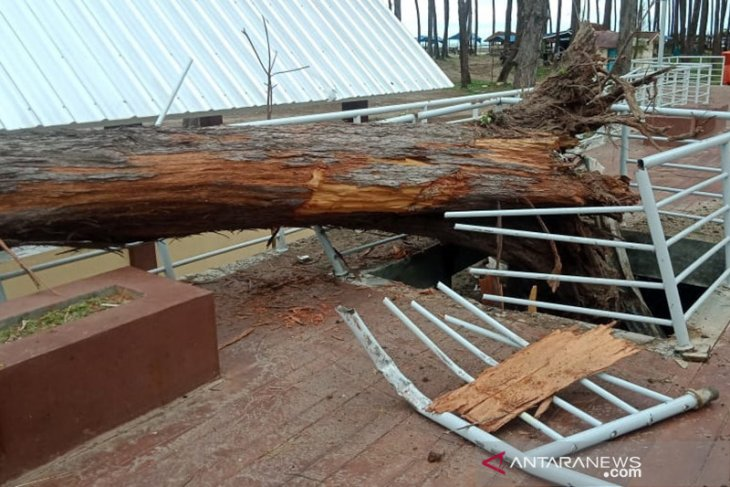 Angin kencang masih melanda Bengkulu dua hari ke depan