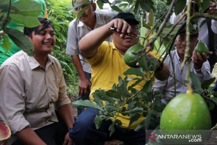 Bupati Sukabumi imbau petani bercocok tanam gunakan model demplot