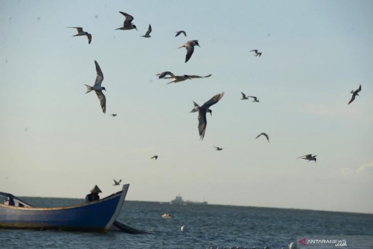 Spesies burung Indonesia bertambah