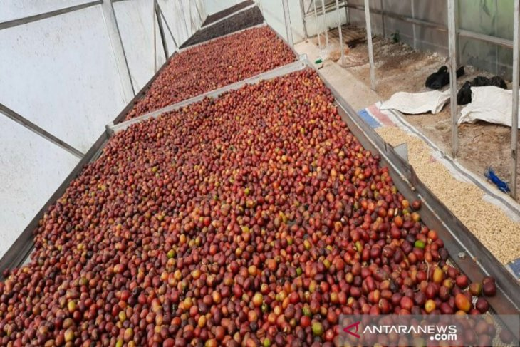 Menjaga asa bisnis kopi Sumatera tetap harum di tengah pandemi