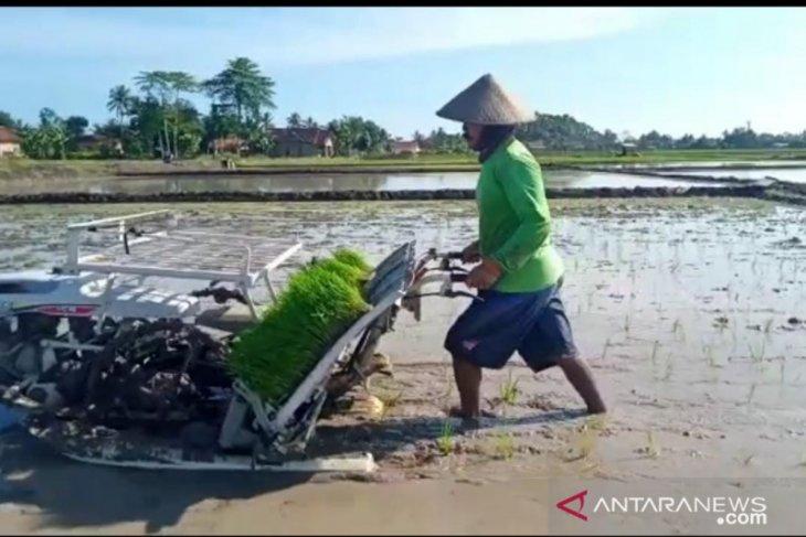 Rice plantation sooner as precaution against food crisis amid pandemic