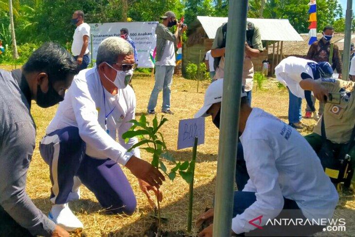 1.500 pohon ditanam di Kei Besar peringati hari lingkungan hidup sedunia