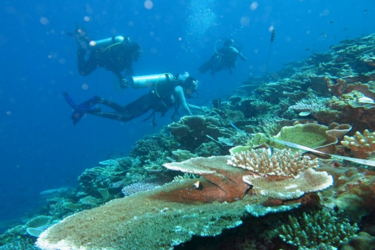 Terumbu karang untuk laut dan ekonomi pesisir