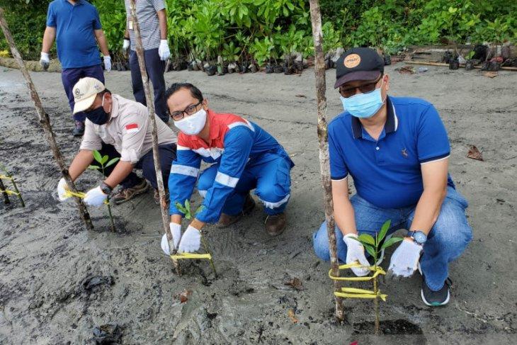 Pertamina Refinery Unit VII Kasim tanam ribuan pohon mangrove