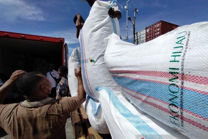 Koperasi: Perkebunan kakao di Manokwari Selatan hanya butuh peremajaan