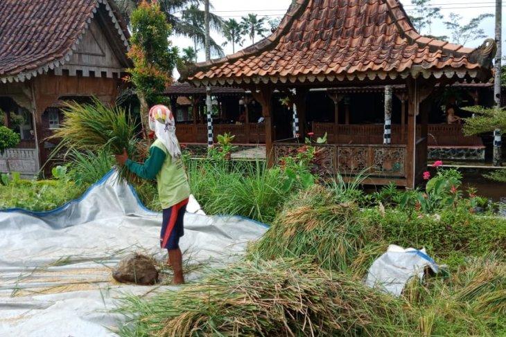 Pendekatan edukasi jadi pilihan BRI dalam berdayakan UMKM di Indonesia
