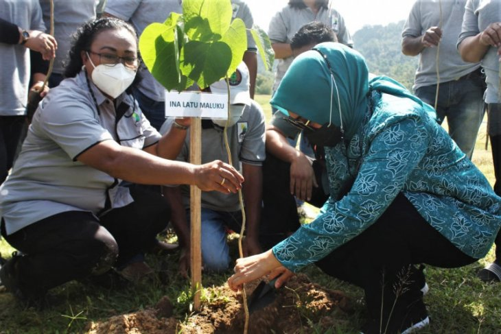 Tim Penggerak PKK Maluku – KPH Ambon tanam 150 pohon di Desa Suli