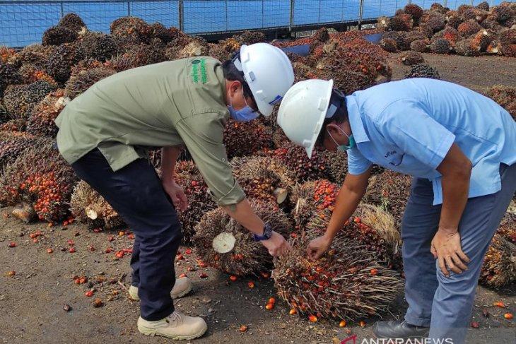 Legislator: Sawit dongkrak ekonomi masyarakat Aceh Barat Daya thumbnail