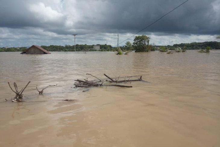Ratusan petani di Kecamatan Satui terancam gagal panen