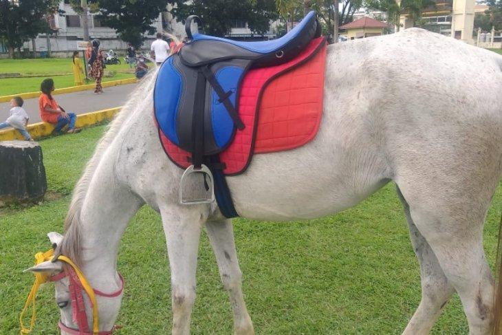 Kuda sewa di Istana Maimun dari Aceh thumbnail