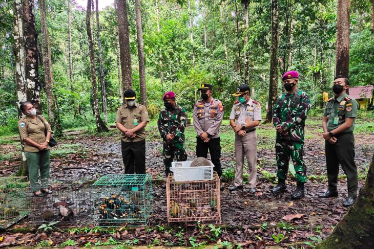 BBKSDA lepas satwa endemik Papua yang hampir punah