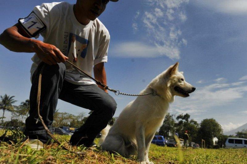 Anjing kintamani mendapat pengakuan dunia