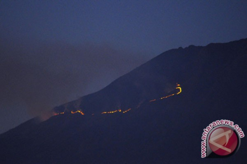42 hektare kawasan hutan Sumbing terbakar