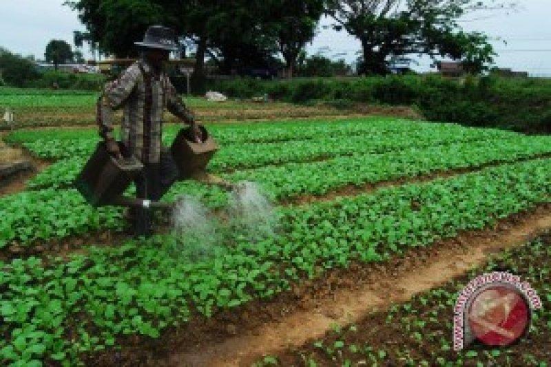 Buah-Sayuran Kurangi Risiko Stroke