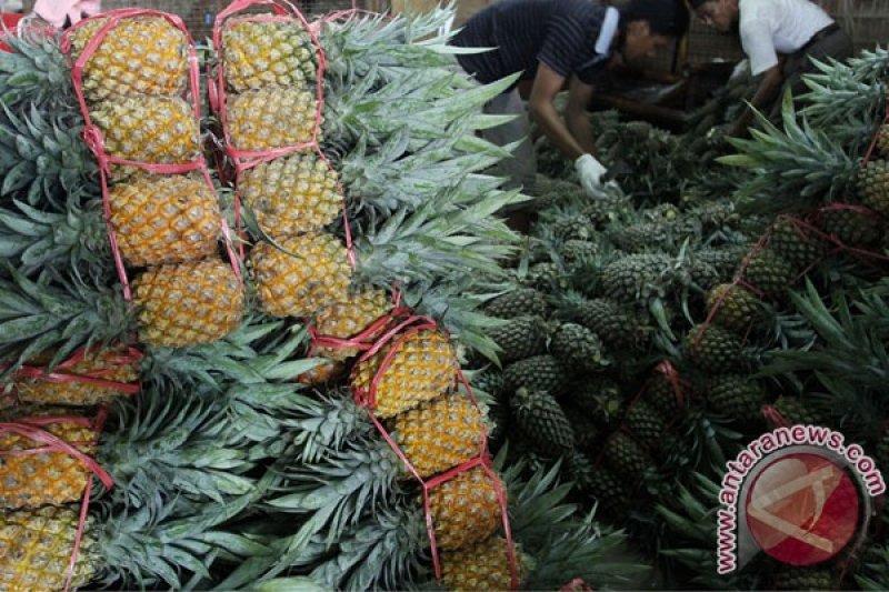 Nanas segar Indonesia siap masuk pasar China