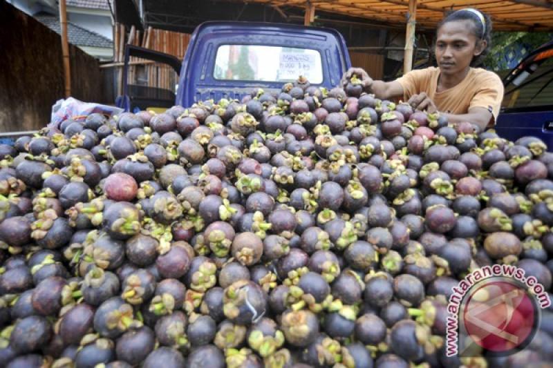 Manggis lebak serbu pasar internasional - ANTARA News Riau